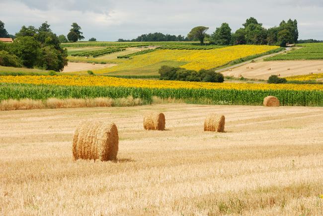 Balle de foin paysage rural