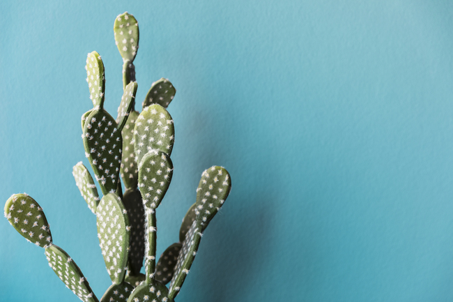 Cactus adaptation changement climatique