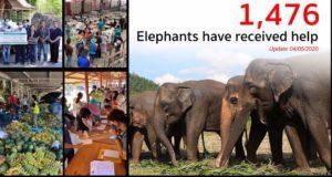 Elephants tourisme et biofiversité