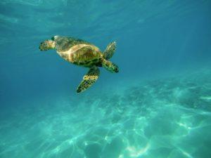 Tourisme de la vie sauvage - Plongée