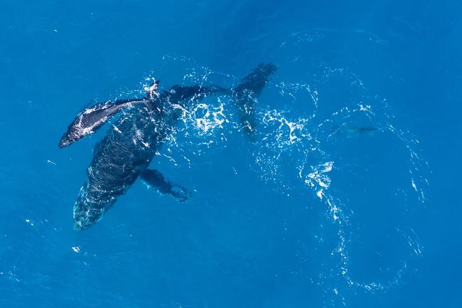 Activité de whale watching évoquée par Lamya Essemlali aux Université du Tourisme Durable